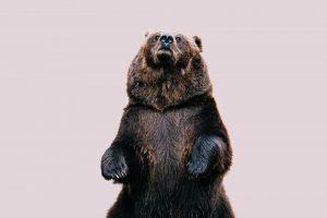 """นักวิเคราะห์คริปโตทำนาย """"จะได้เห็นตลาดหมีไปอีกกว่า 7 เดือนก่อนที่ตลาดจะดีขึ้นอีกครั้ง"""""""