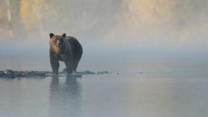 """องค์กรสินทรัพย์ดิจิทัลชั้นนำในยุโรปชี้ """"ตลาดหมีคือสิ่งที่จำเป็นสำหรับตลาดคริปโต"""""""