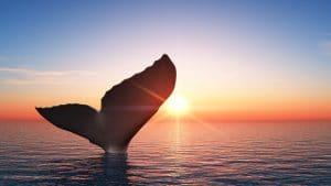 คาดนักลงทุนวาฬโอน Bitcoin 10,000 เหรียญเข้า Binance เพื่อเทขาย