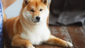 กรณีศึกษาพิเศษวัยรุ่นชักจูงให้ซื้อเหรียญ Dogecoin ทำให้ราคาอาจพุ่งไปถึง 1 ดอลลาร์ได้